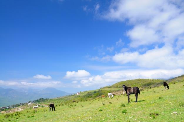 Paarden grazen op het gazon tussen de bergen