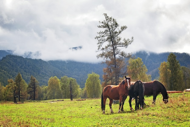 Paarden in berglandschap vrijheid