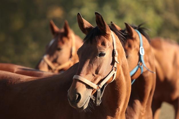 Paarden in een weiland in de schemering