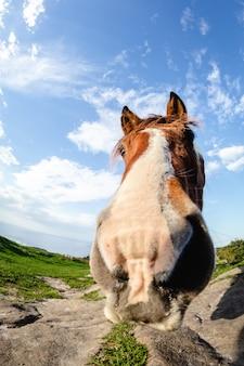 Paarden met grappige en nieuwsgierige gezichten in vrijheid op de berg