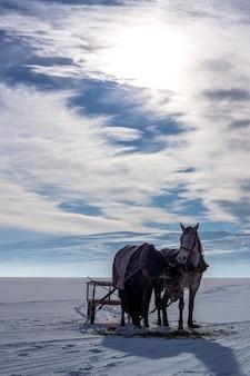 Paarden met sleeën aan de oever van het bevroren cildir-meer in de winter
