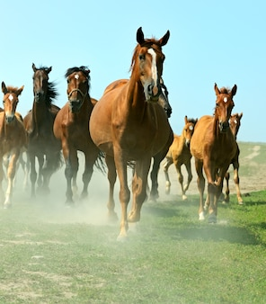 Paarden op de boerderij in de zomer