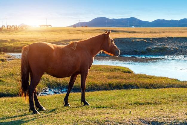 Paarden op de prairie