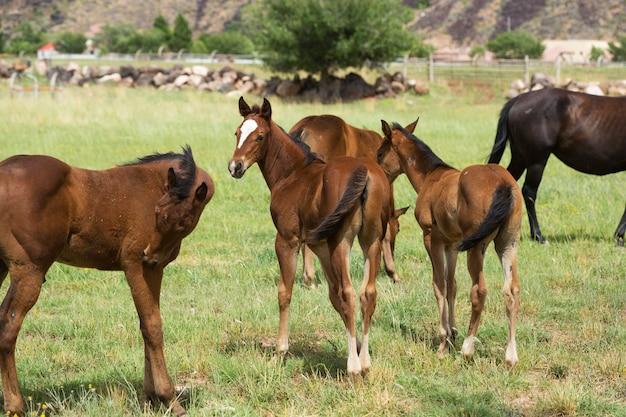 Paarden op een boerderij veld