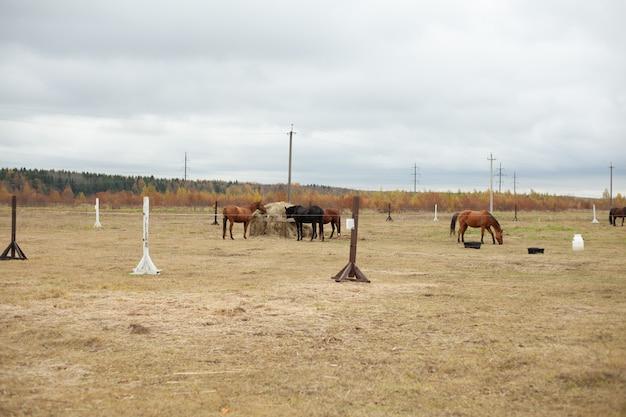 Paarden op het gebied van de herfst