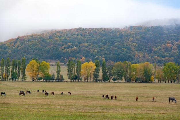 Paarden van verschillende kleuren die in de herfstaard lopen