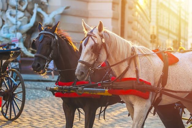 Paarden voor getrokken koets of fiaker, populaire toeristische attractie, op michaelerplatz in wenen, oostenrijk.