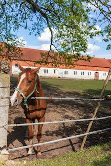 Paardenbinnenplaats in het dorp. roodharige paard in een stal met ruiter, close-up