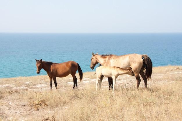 Paardenfamilie