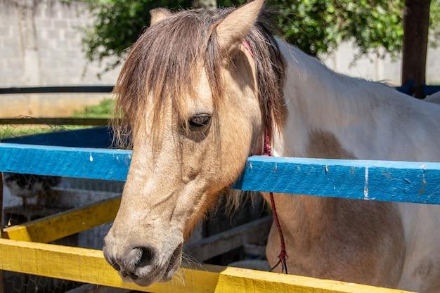 Paardenhoofd in een stal in rio de janeiro.