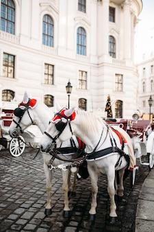 Paardenkoets dichtbij het kasteel in wenen. hoge kwaliteit foto