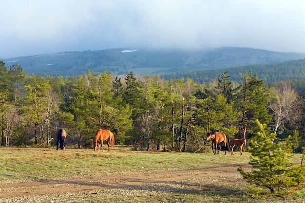 Paardenkudde met klein veulen op bergheuvel