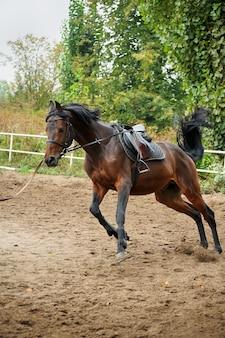 Paardentuig rijdt op de renbaan.