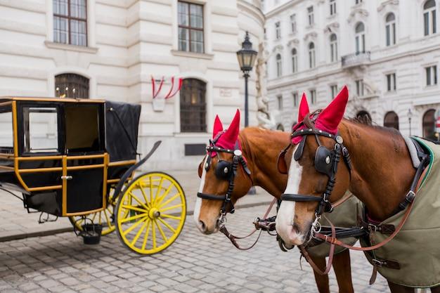 Paardenwagens voor paleis hofburg in wenen, oostenrijk