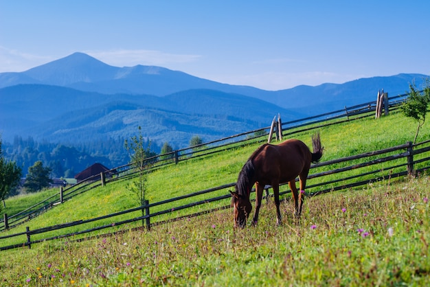 Paardenweide in de zomer