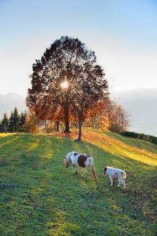 Paardmoeder met haar klein landbouwbedrijf bij zonsondergang