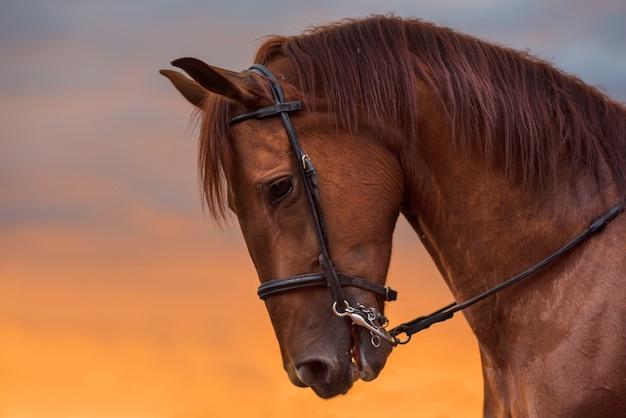 Paardportret bij zonsondergang