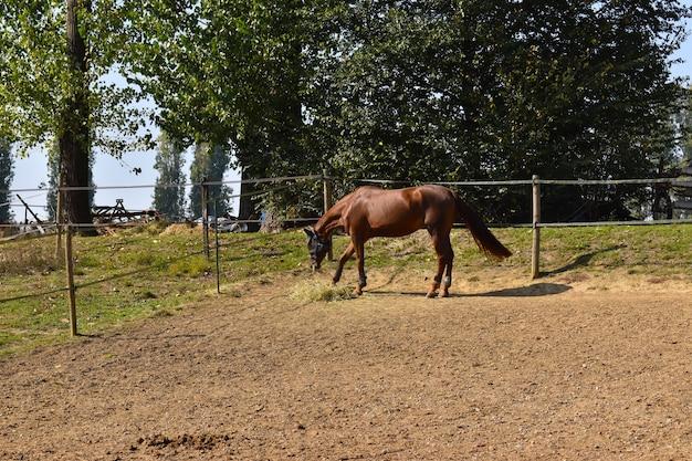 Paardrijden op het platteland