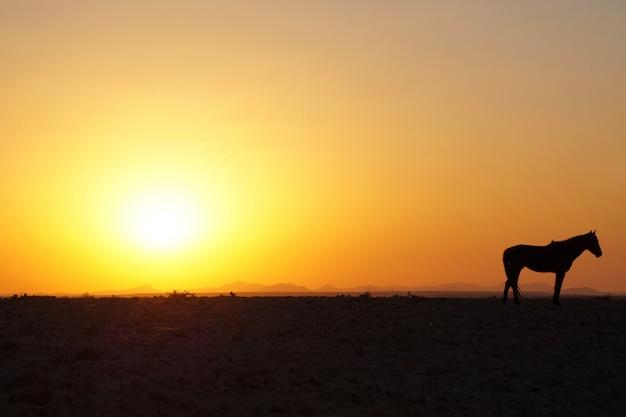 Paardzonsondergang in aus, namibië