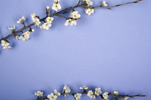 Paarse achtergrond met takken van witte bloemen van kers