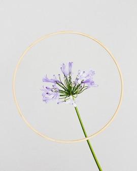 Paarse bloem met gouden frame