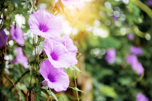 Paarse bloem met zonlicht.