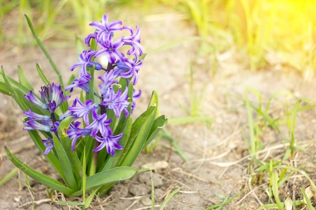 Paarse bloem met zonneschijn