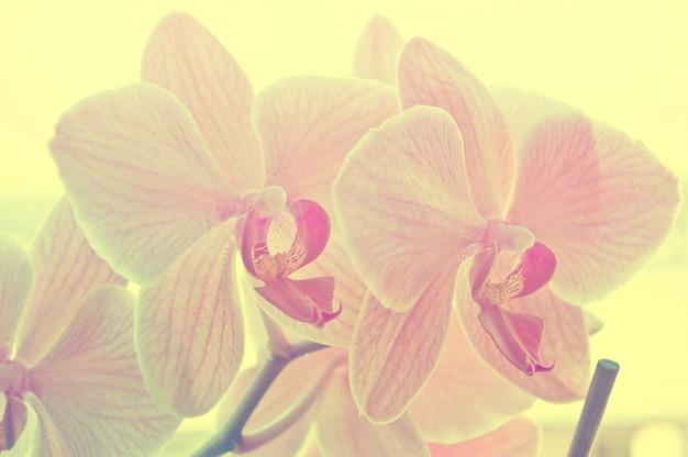 Paarse bloemen close-up