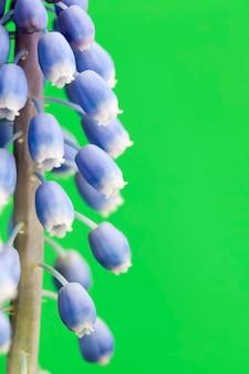 Paarse bloemen die groeien in het lenteseizoen