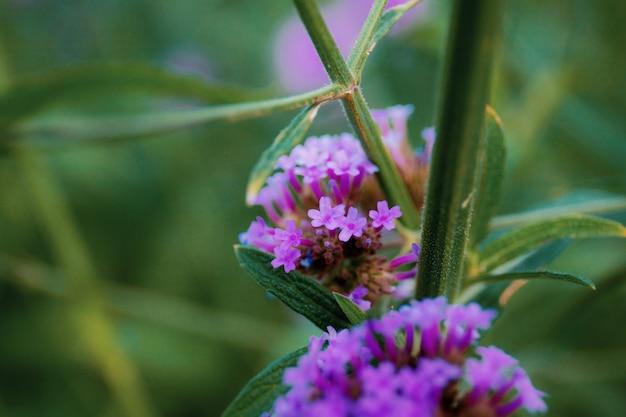 Paarse bloemen gaan samen met het mooie van de natuur.