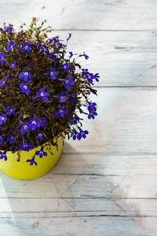 Paarse bloemen in een gele pot op een wit-blauwe en roze houten.