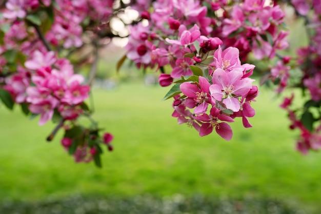 Paarse bloemen op boomtak tegen groene achtergrond