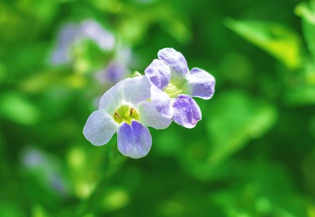 Paarse bloemen op groen oppervlak