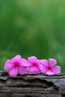 Paarse bloemen op hout natuur achtergrond