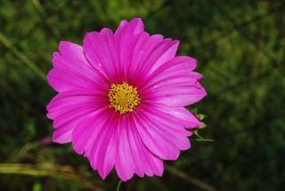 Paarse bloemen, planten, schoon