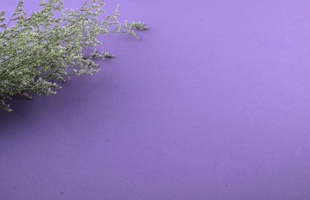 Paarse bloemen plat lag op paarse achtergrond minimalistische stijl