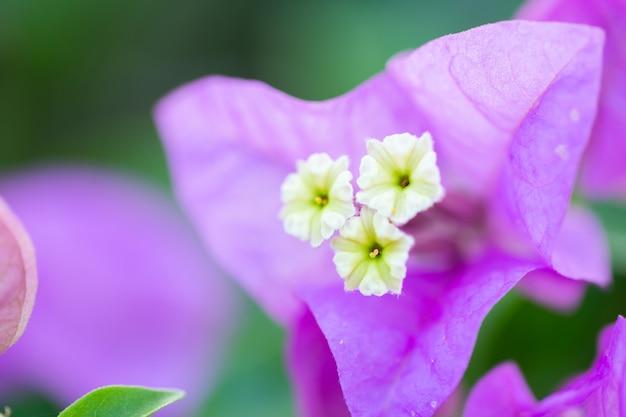 Paarse bloemen wazig achtergrond