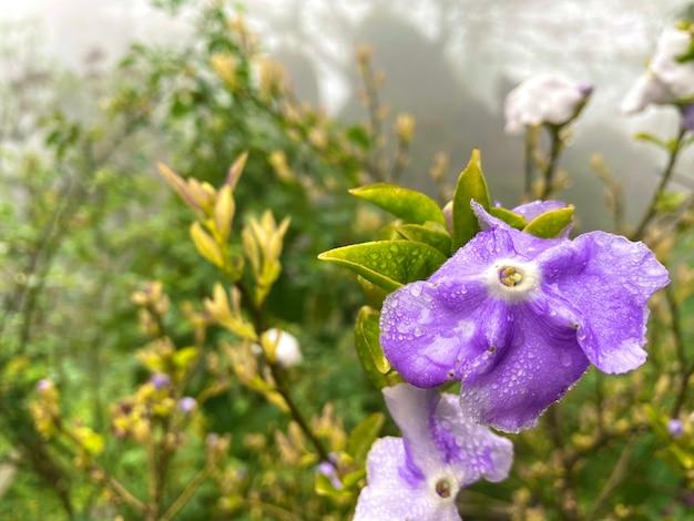Paarse bloemendauw in de winter