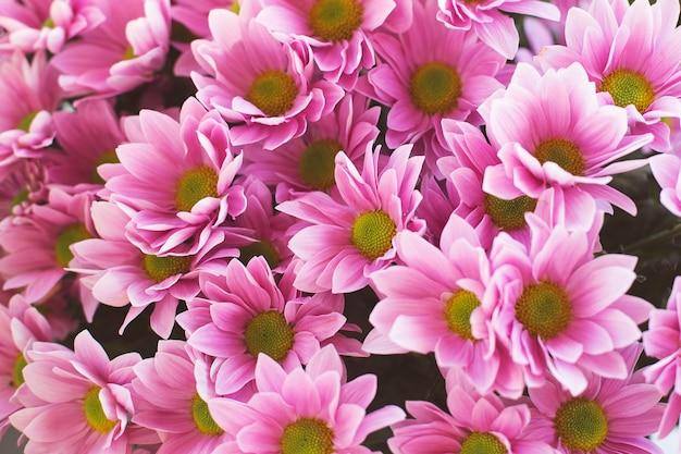 Paarse chrysanthemum bloemen in een boeket. bloem achtergrond