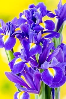 Paarse iris bloem close-up
