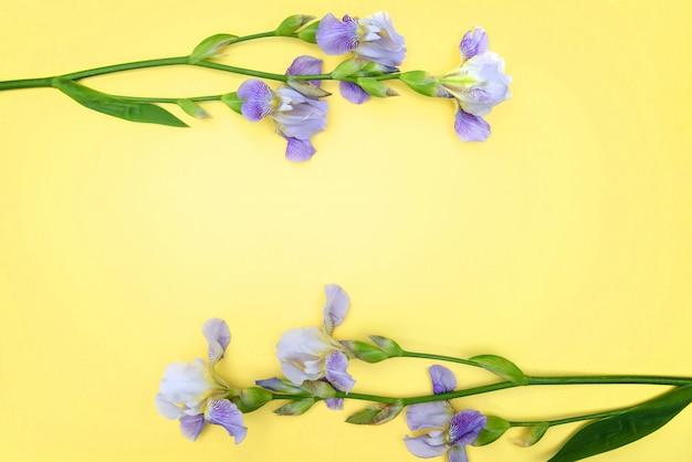 Paarse irissen op gele achtergrond