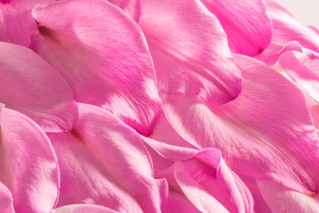 Paarse lelies bloemblaadjes achtergrond samenstelling, close-up.