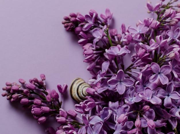 Paarse lila tak op violet