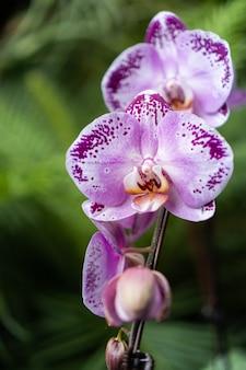 Paarse orchidee op wazig van groene plant