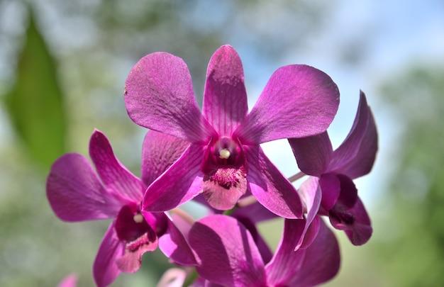 Paarse orchideebloemen in de natuur op groene en witte achtergrond