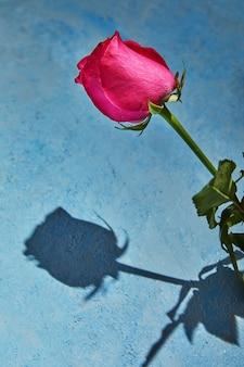 Paarse roos met harde schaduw op een blauwe achtergrond.