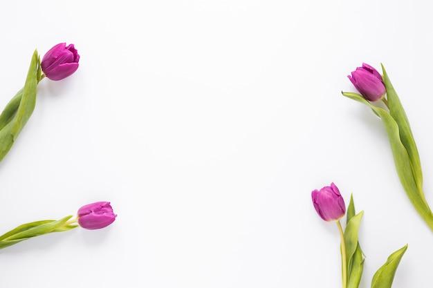 Paarse tulp bloemen verspreid op tafel