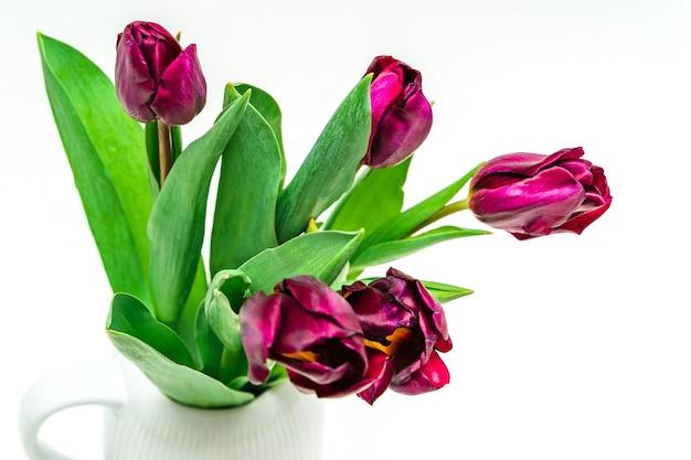 Paarse tulpen in vaas op een witte geïsoleerde achtergrond. bloemsamenstelling en lente concept