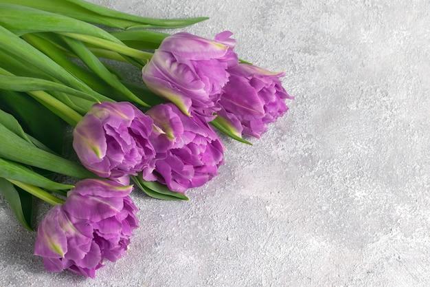 Paarse tulpen op grijze gestructureerde achtergrond