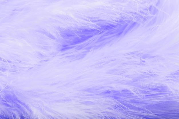 Paarse vogelveren in zachte en onscherpe stijl